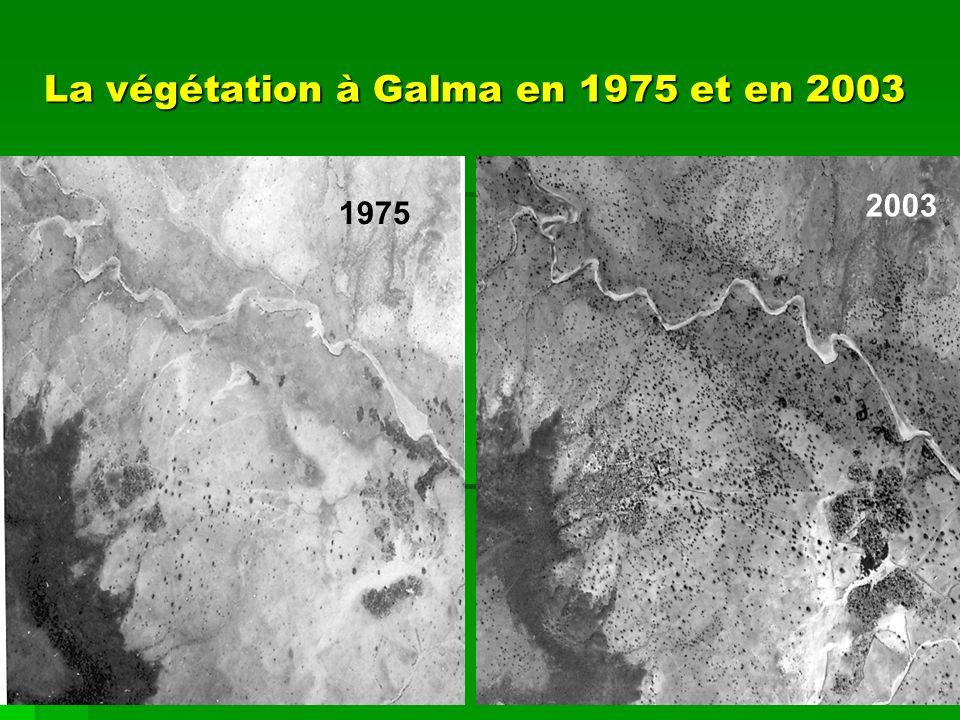 La végétation à Galma en 1975 et en 2003