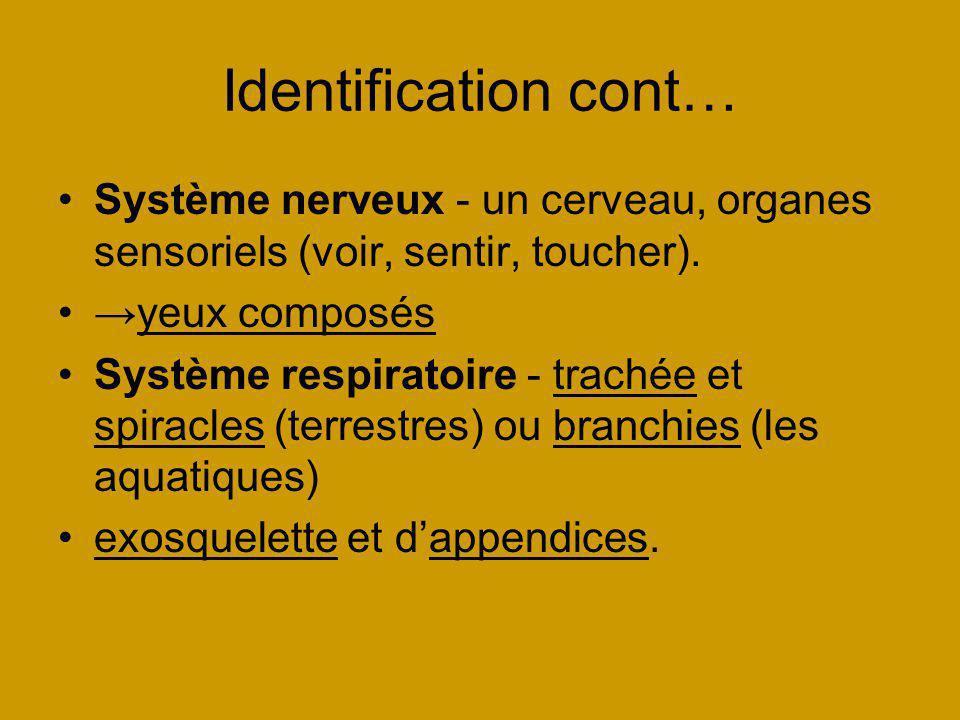 Identification cont… Système nerveux - un cerveau, organes sensoriels (voir, sentir, toucher). →yeux composés.