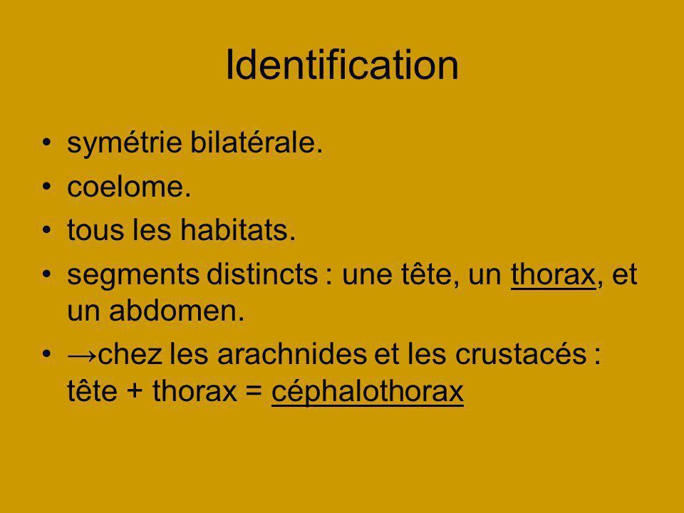 Identification symétrie bilatérale. coelome. tous les habitats.