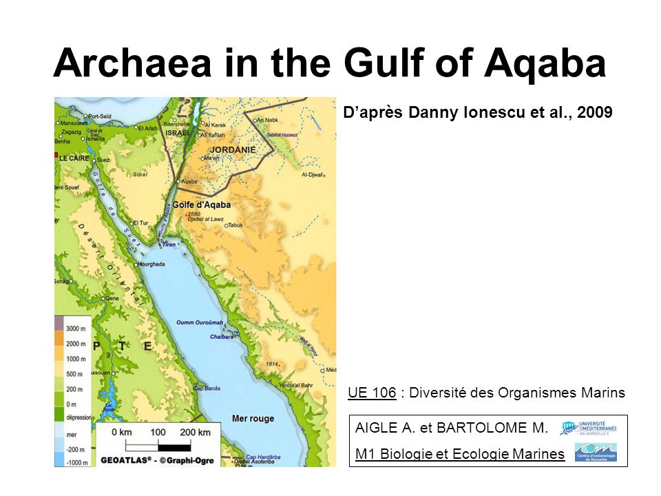 Archaea in the Gulf of Aqaba