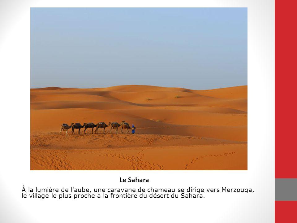 À la lumière de l aube, une caravane de chameau se dirige vers Merzouga, le village le plus proche a la frontière du désert du Sahara.
