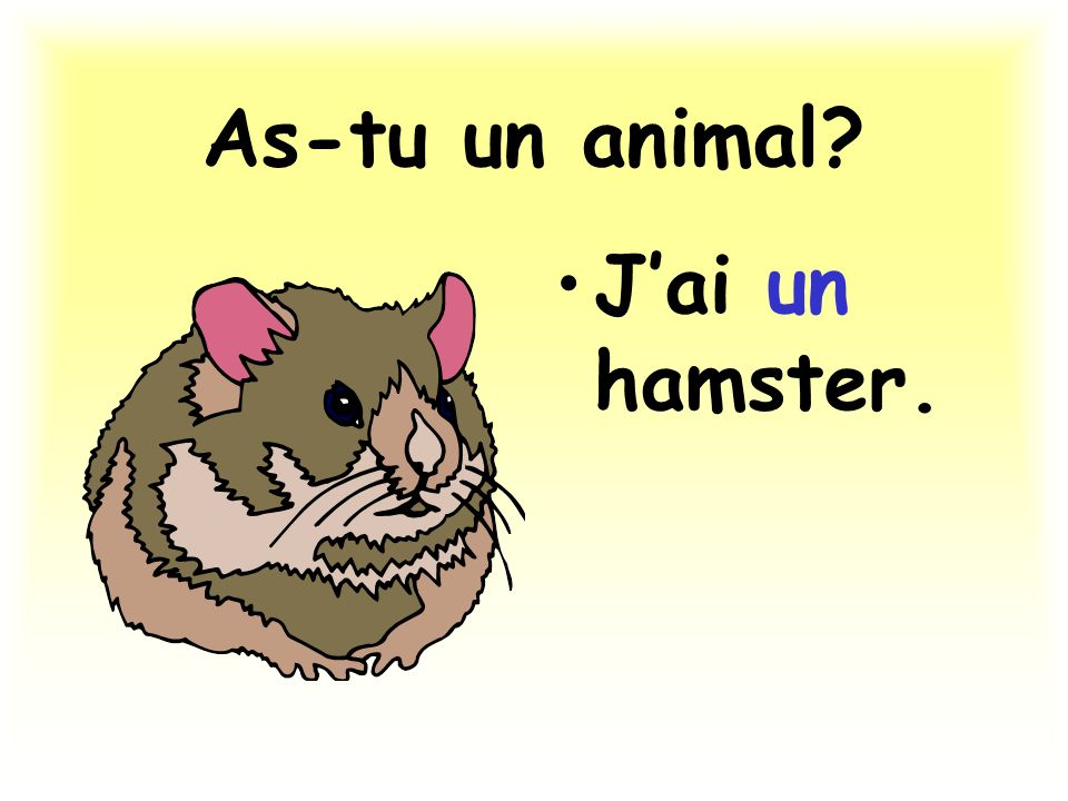 As-tu un animal J'ai un hamster.