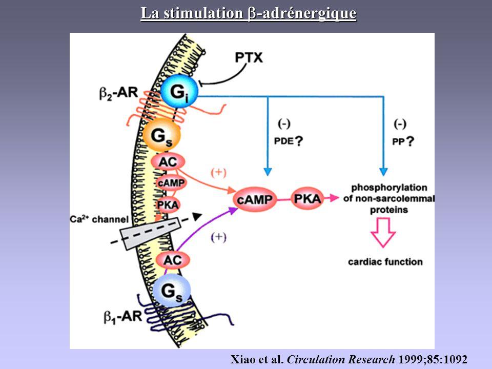La stimulation b-adrénergique