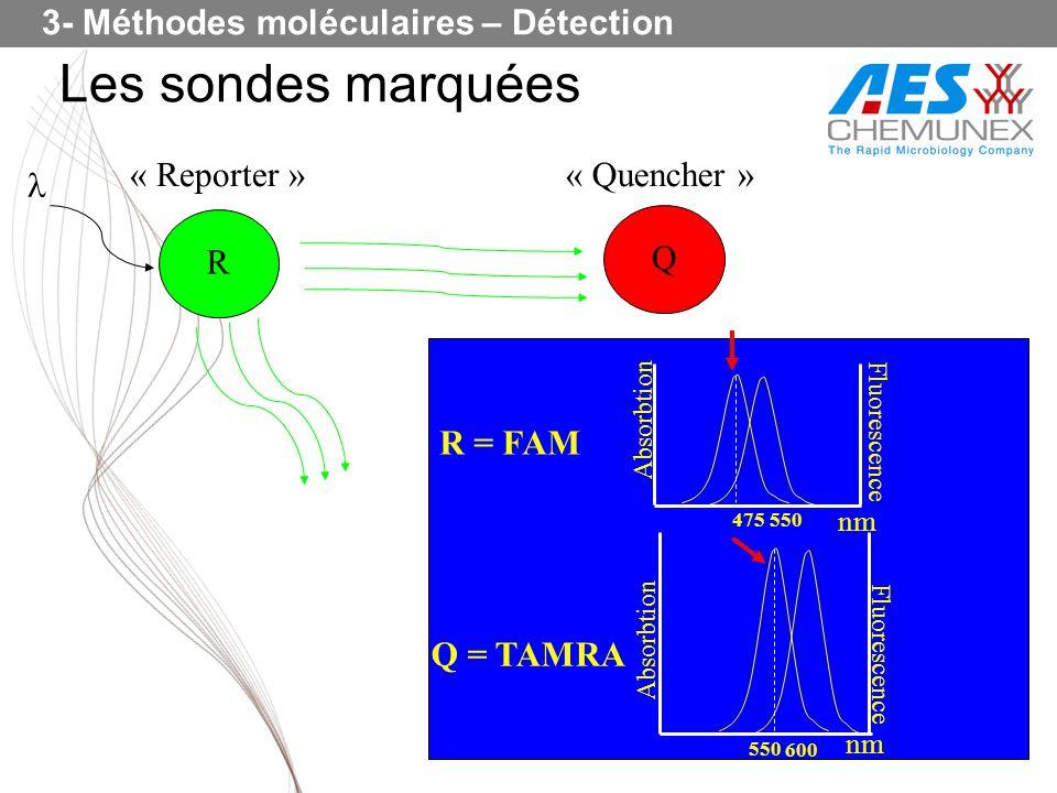 Les sondes marquées 3- Méthodes moléculaires – Détection R