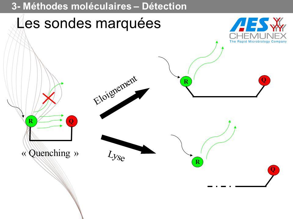 Les sondes marquées 3- Méthodes moléculaires – Détection Eloignement