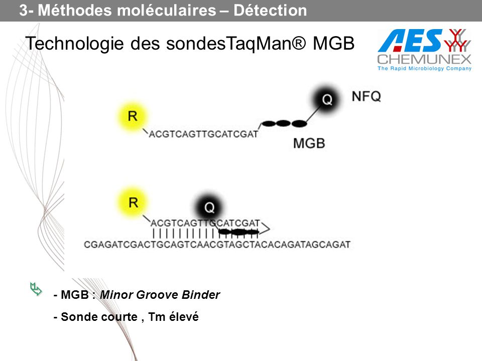 Technologie des sondesTaqMan® MGB