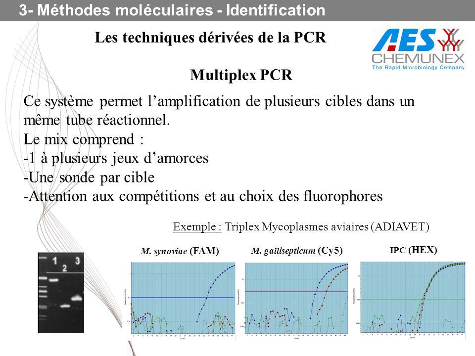 3- Méthodes moléculaires - Identification