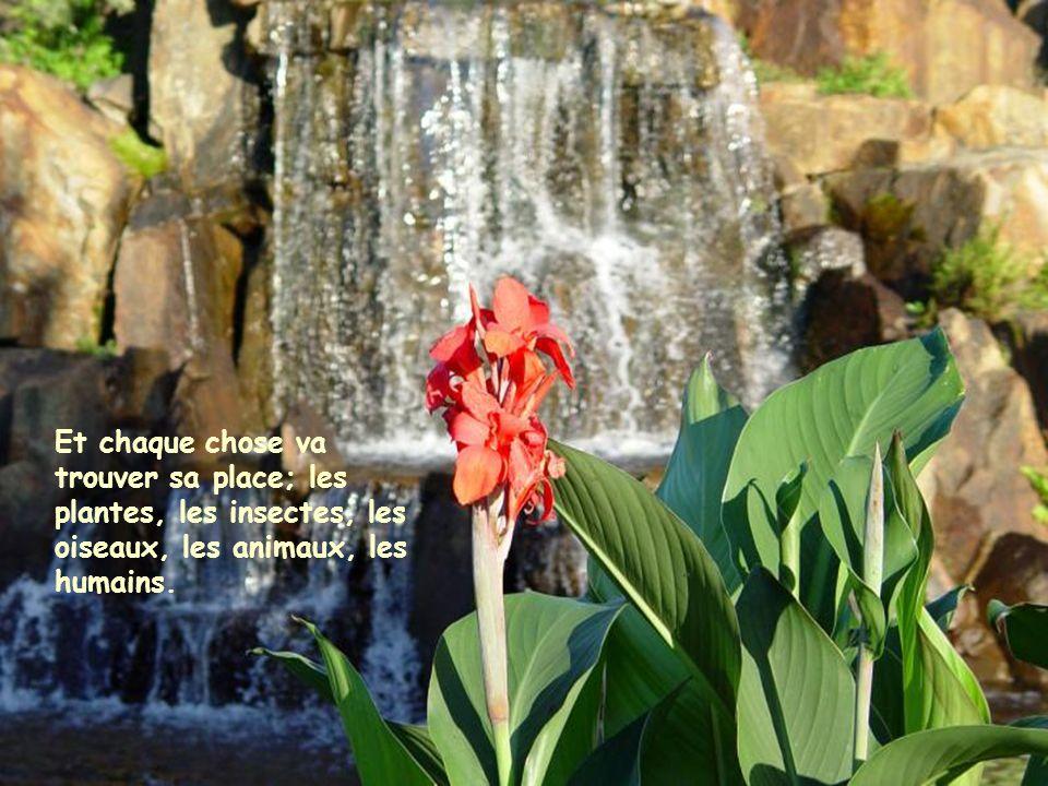 Et chaque chose va trouver sa place; les plantes, les insectes, les oiseaux, les animaux, les humains.