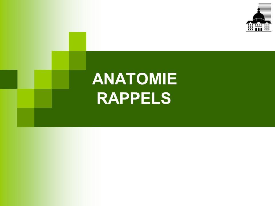 ANATOMIE RAPPELS