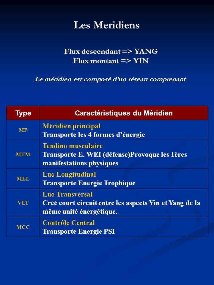 Les Meridiens Flux descendant => YANG Flux montant => YIN