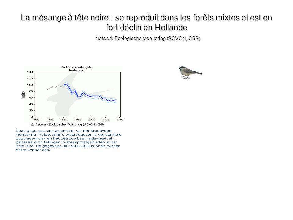 La mésange à tête noire : se reproduit dans les forêts mixtes et est en fort déclin en Hollande Netwerk Ecologische Monitoring (SOVON, CBS)