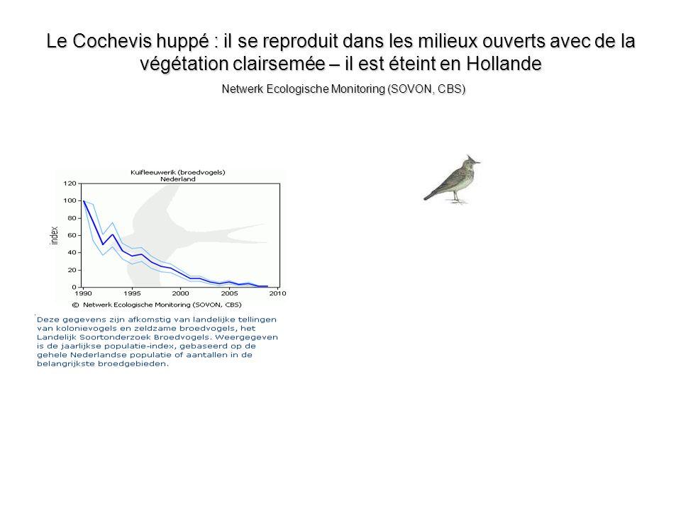 Le Cochevis huppé : il se reproduit dans les milieux ouverts avec de la végétation clairsemée – il est éteint en Hollande Netwerk Ecologische Monitoring (SOVON, CBS)