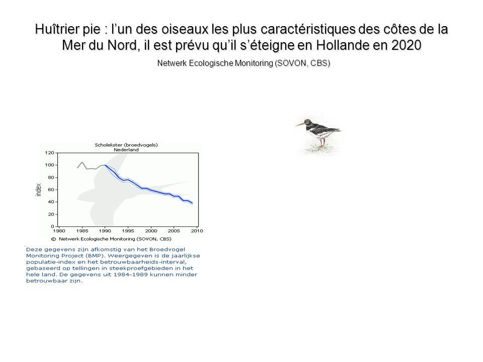 Huîtrier pie : l'un des oiseaux les plus caractéristiques des côtes de la Mer du Nord, il est prévu qu'il s'éteigne en Hollande en 2020 Netwerk Ecologische Monitoring (SOVON, CBS)