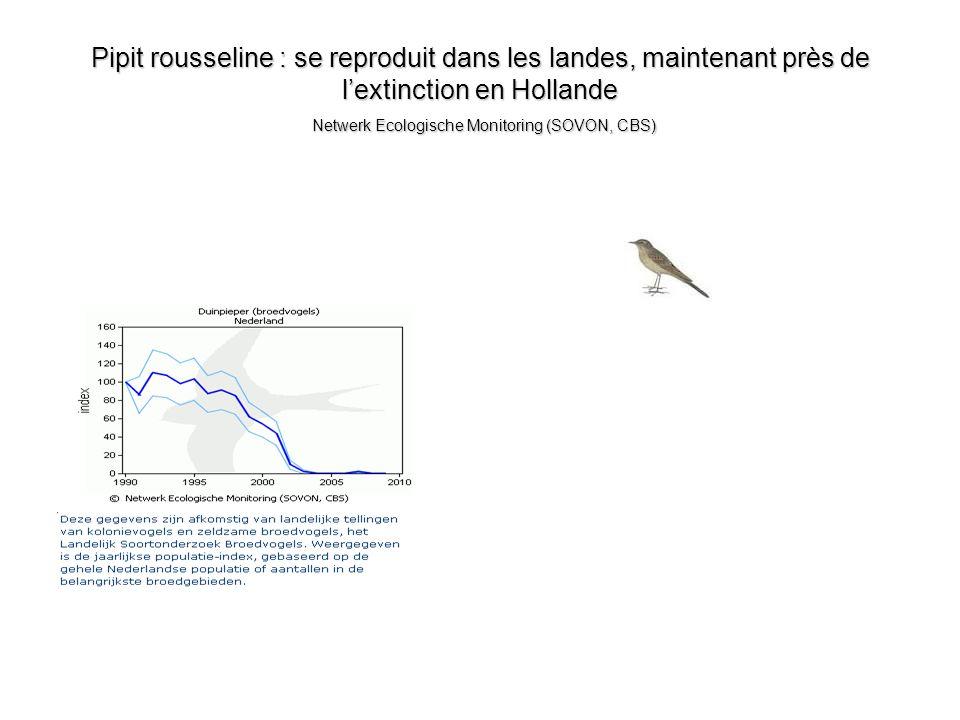Pipit rousseline : se reproduit dans les landes, maintenant près de l'extinction en Hollande Netwerk Ecologische Monitoring (SOVON, CBS)