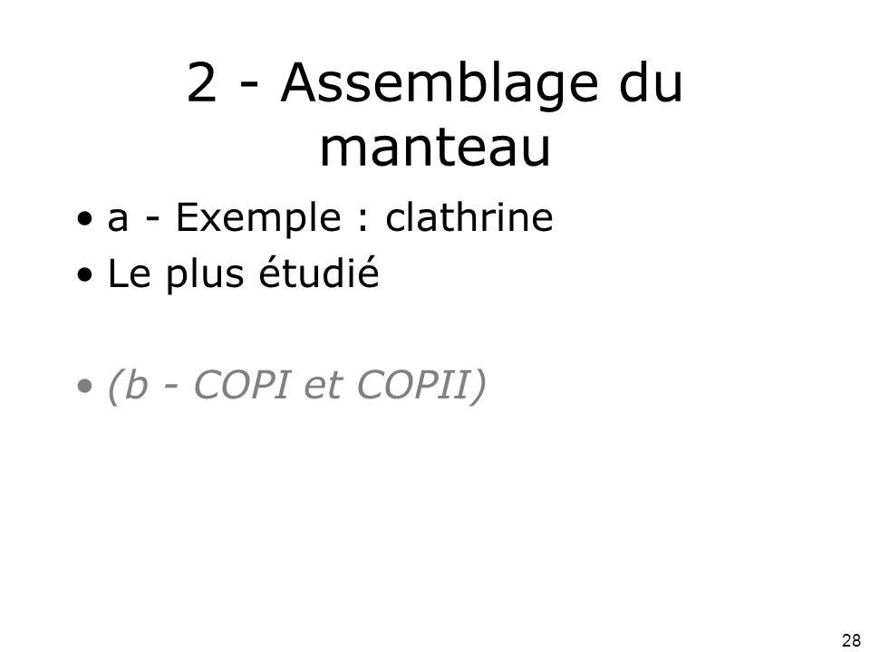 2 - Assemblage du manteau