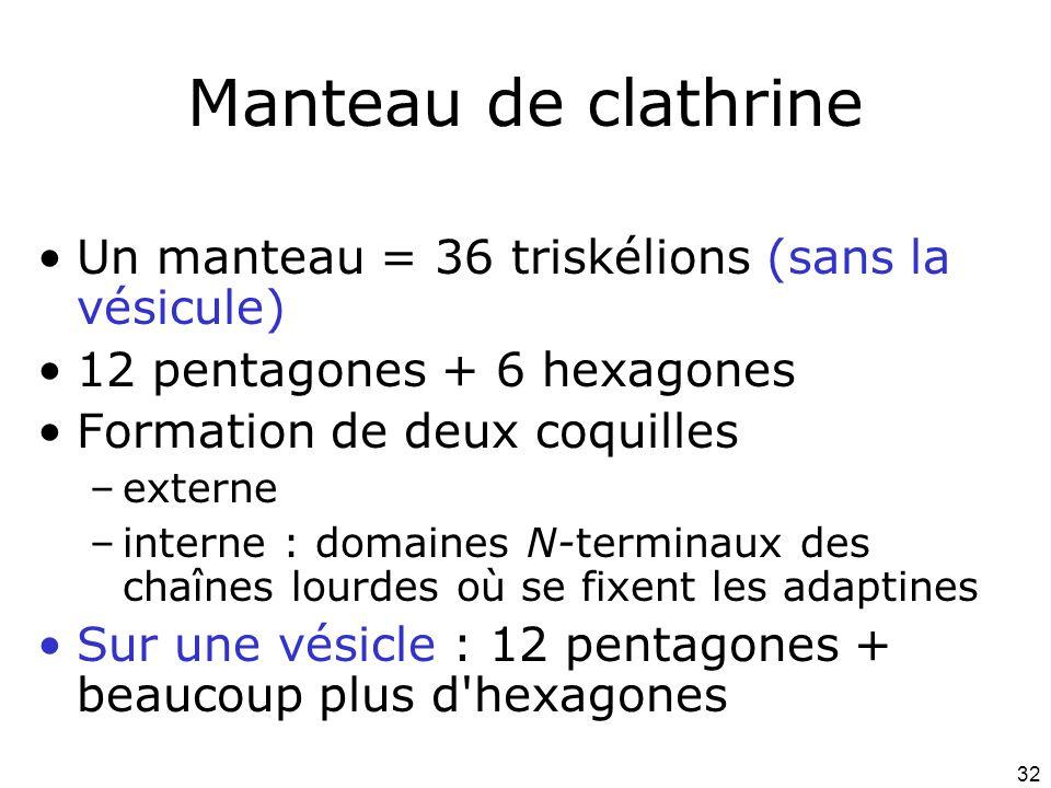 Manteau de clathrine Un manteau = 36 triskélions (sans la vésicule)
