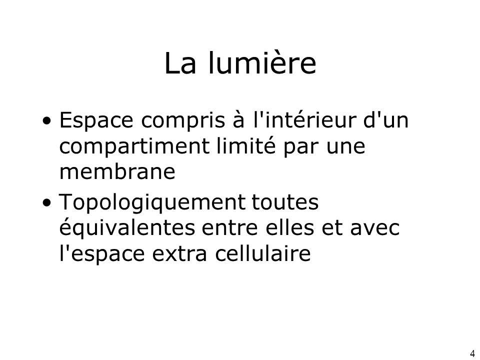 La lumière Espace compris à l intérieur d un compartiment limité par une membrane.