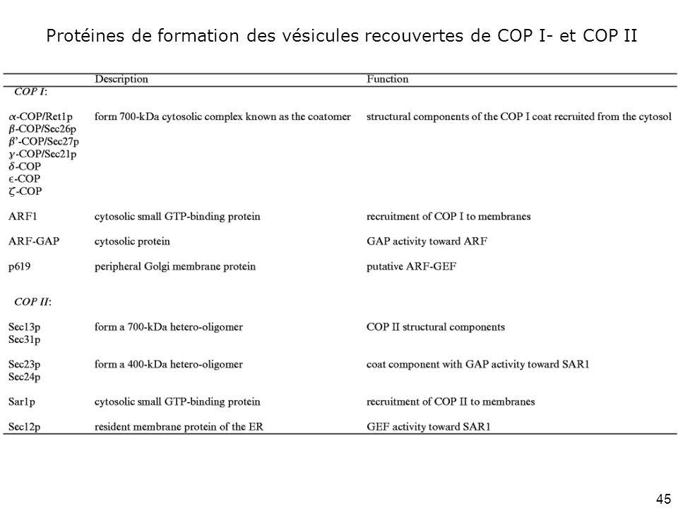 Protéines de formation des vésicules recouvertes de COP I- et COP II