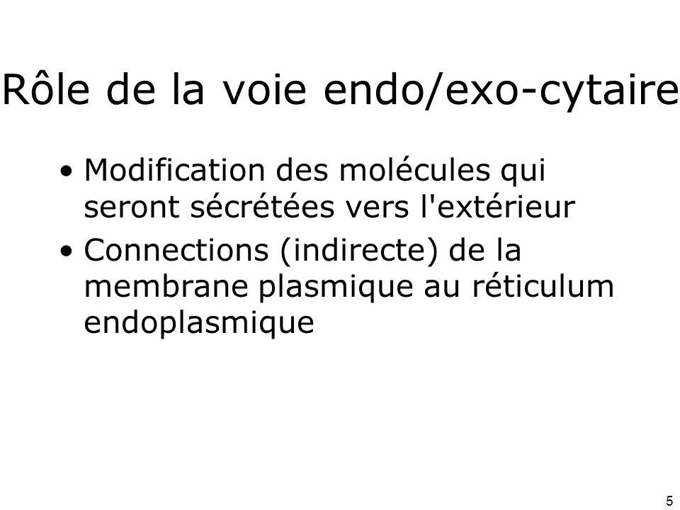 Rôle de la voie endo/exo-cytaire