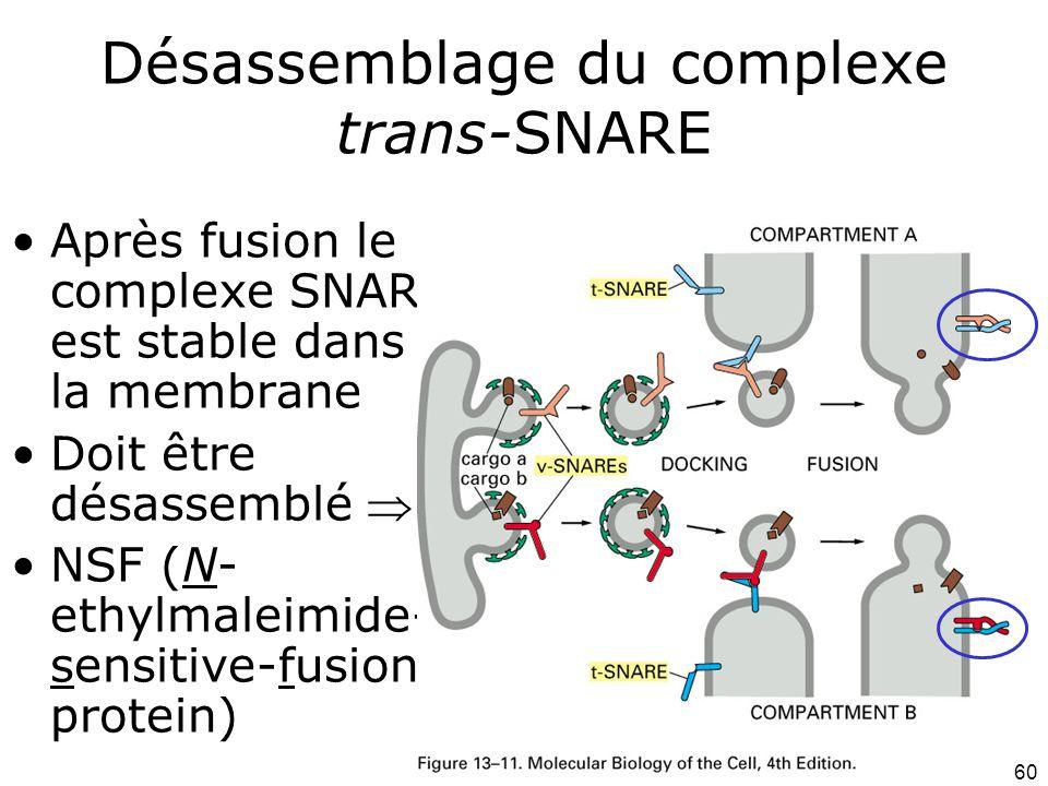 Désassemblage du complexe trans-SNARE