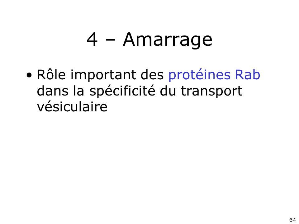 Lundi 1 octobre 2007 4 – Amarrage. Rôle important des protéines Rab dans la spécificité du transport vésiculaire.