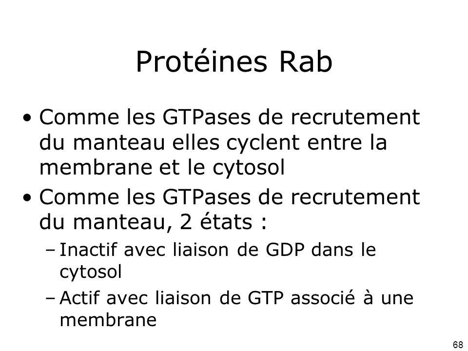 Protéines Rab Comme les GTPases de recrutement du manteau elles cyclent entre la membrane et le cytosol.