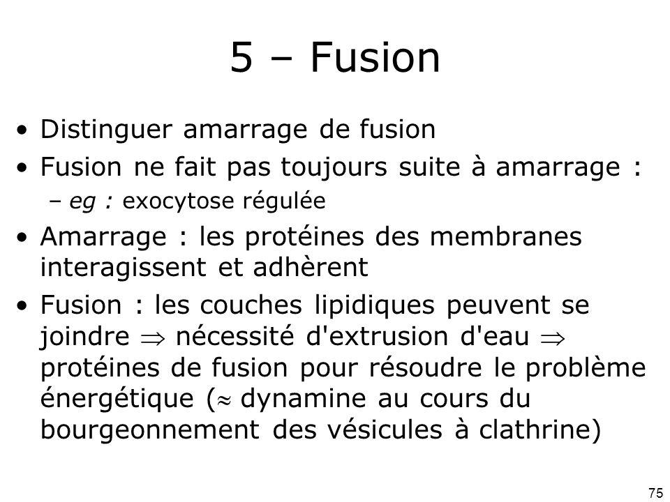 5 – Fusion Distinguer amarrage de fusion