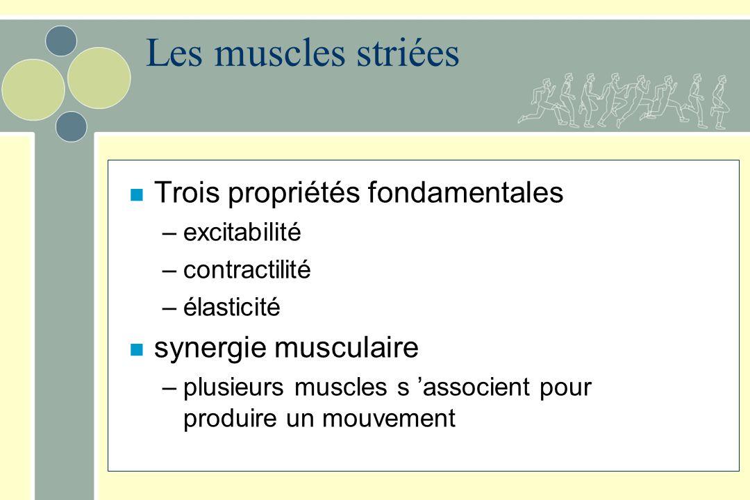 Les muscles striées Trois propriétés fondamentales synergie musculaire