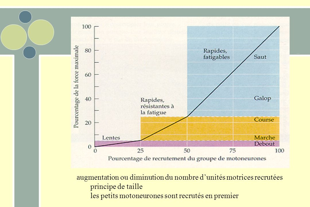 augmentation ou diminution du nombre d'unités motrices recrutées