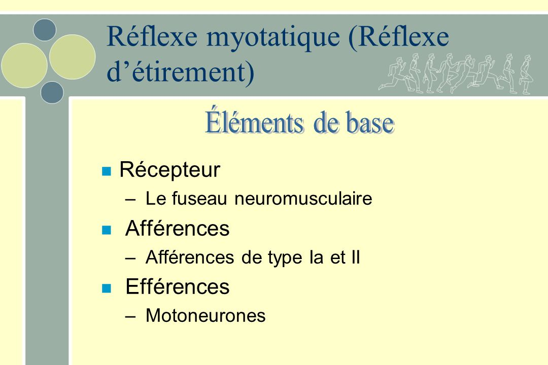 Réflexe myotatique (Réflexe d'étirement)