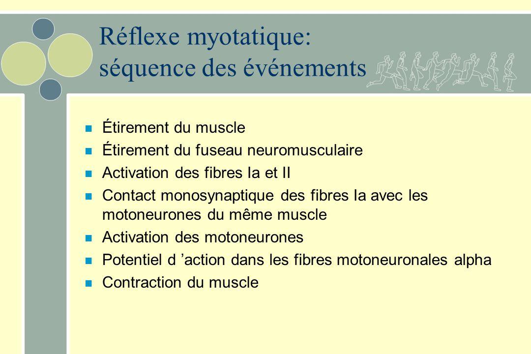 Réflexe myotatique: séquence des événements