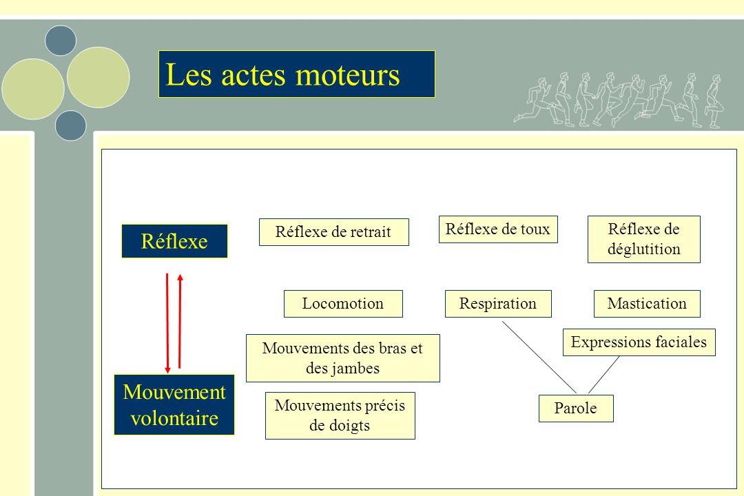 Les actes moteurs Réflexe Mouvement volontaire Réflexe de retrait
