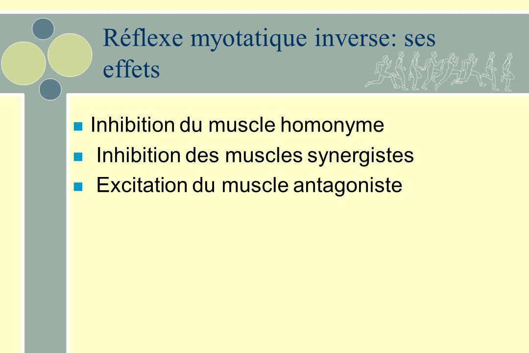 Réflexe myotatique inverse: ses effets