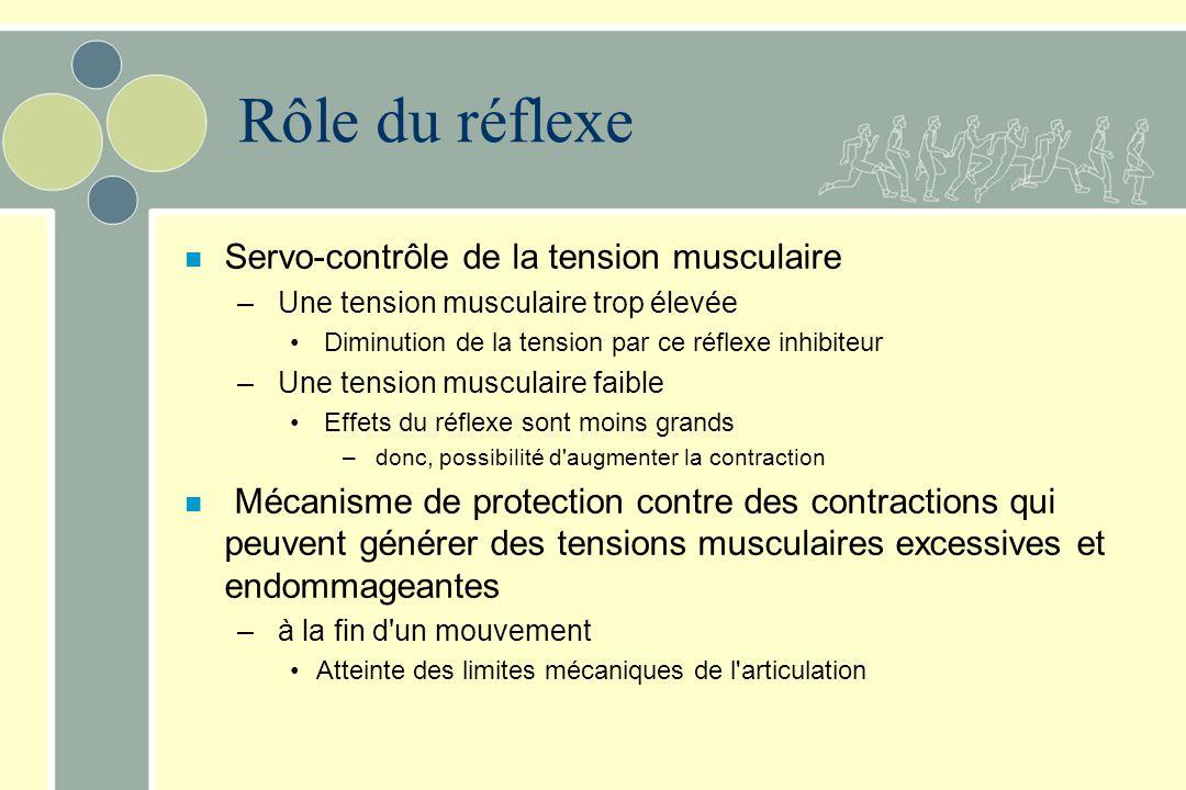 Rôle du réflexe Servo-contrôle de la tension musculaire