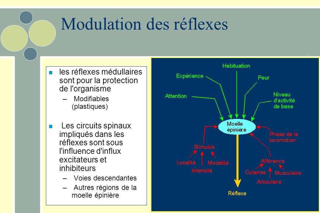 Modulation des réflexes