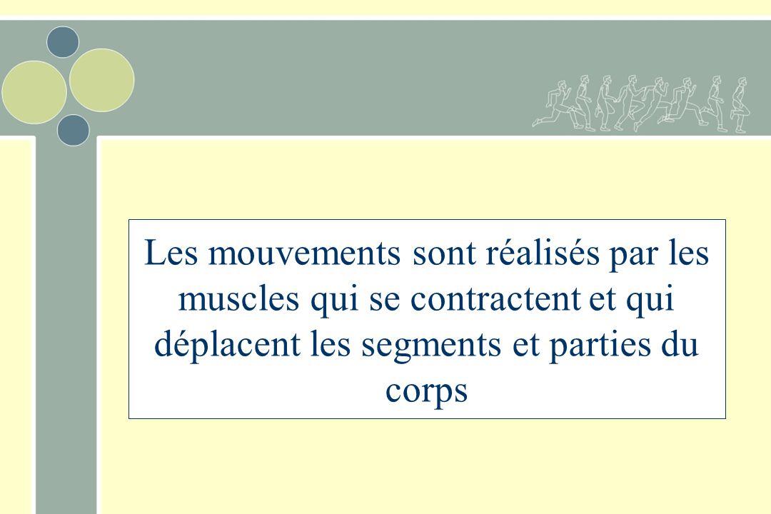 Les mouvements sont réalisés par les muscles qui se contractent et qui déplacent les segments et parties du corps