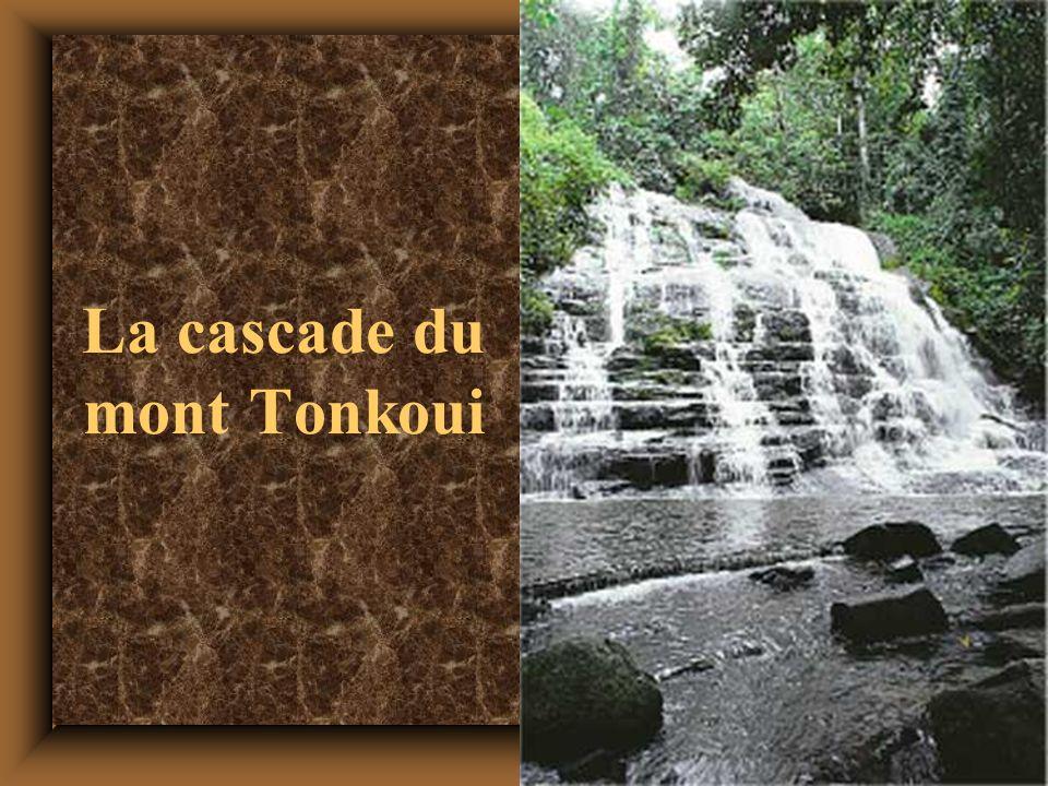 La cascade du mont Tonkoui