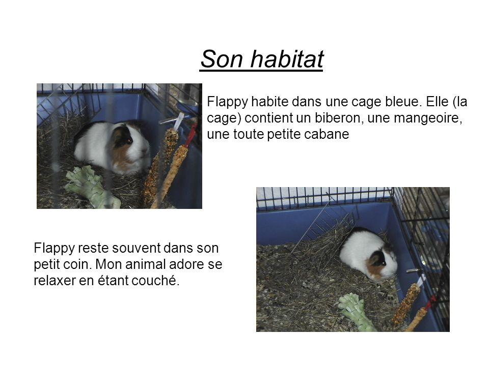 Son habitat Flappy habite dans une cage bleue. Elle (la cage) contient un biberon, une mangeoire, une toute petite cabane.