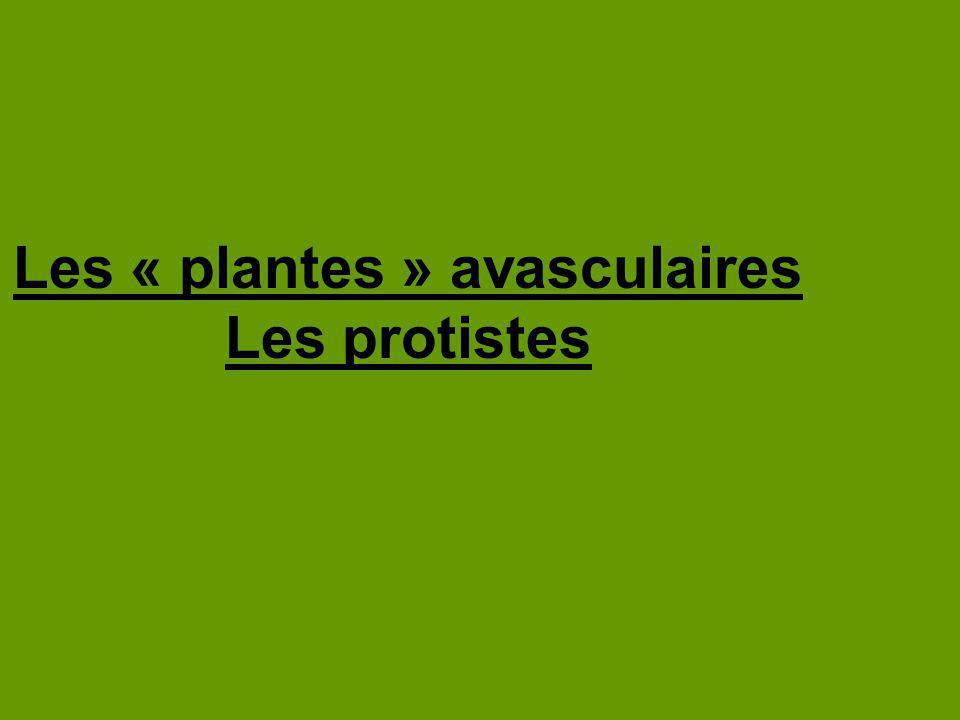 Les « plantes » avasculaires Les protistes