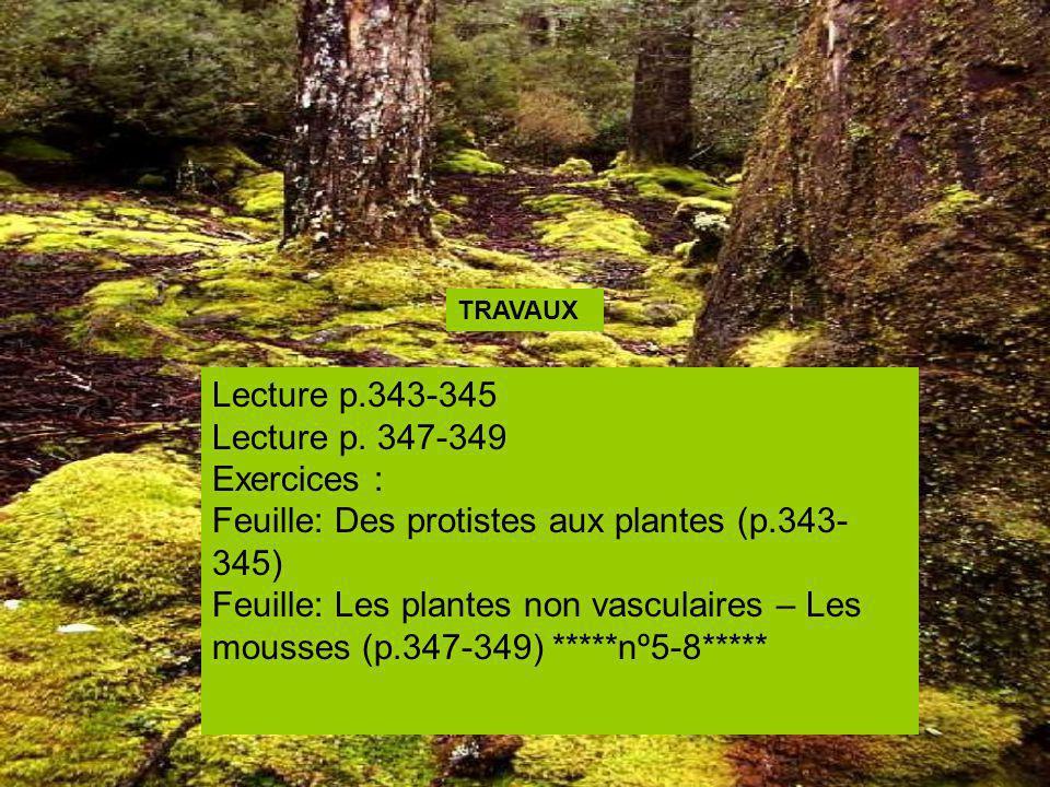 Feuille: Des protistes aux plantes (p.343-345)