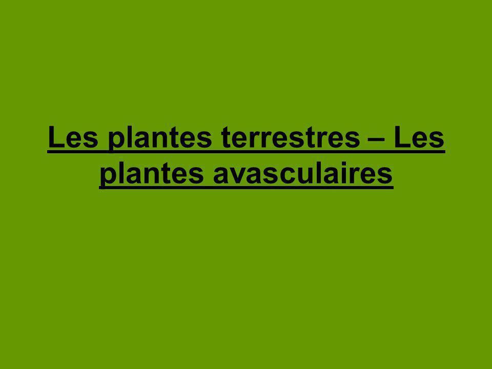 Les plantes terrestres – Les plantes avasculaires