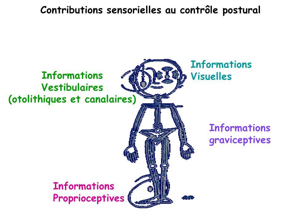 Contributions sensorielles au contrôle postural