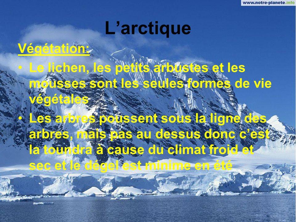 L'arctique Végétation: