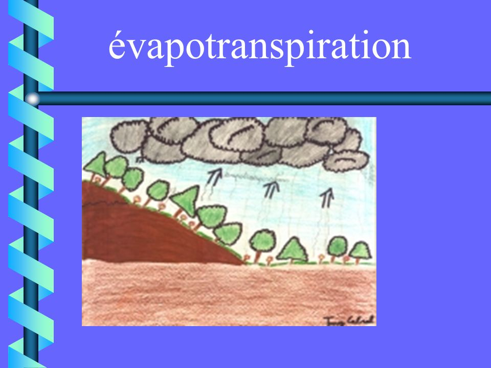 évapotranspiration