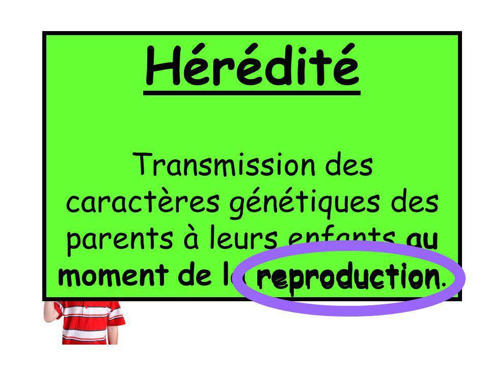 Par un principe de transmission des caractères appelé: l'HÉRÉDITÉ