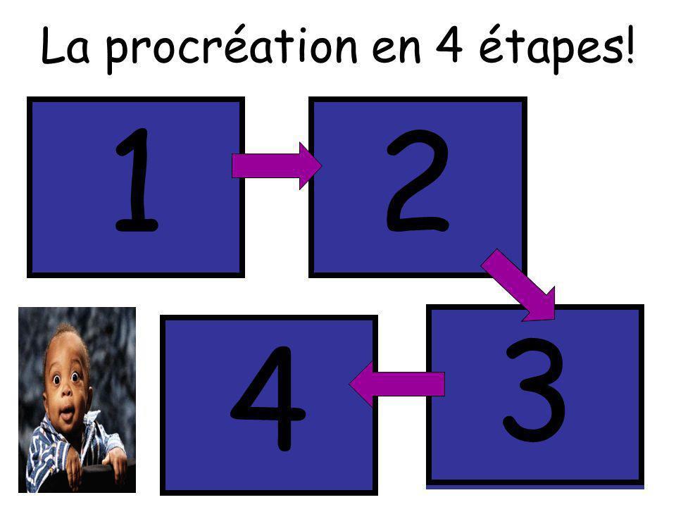 1 2 3 4 La procréation en 4 étapes! Fécondation Méiose