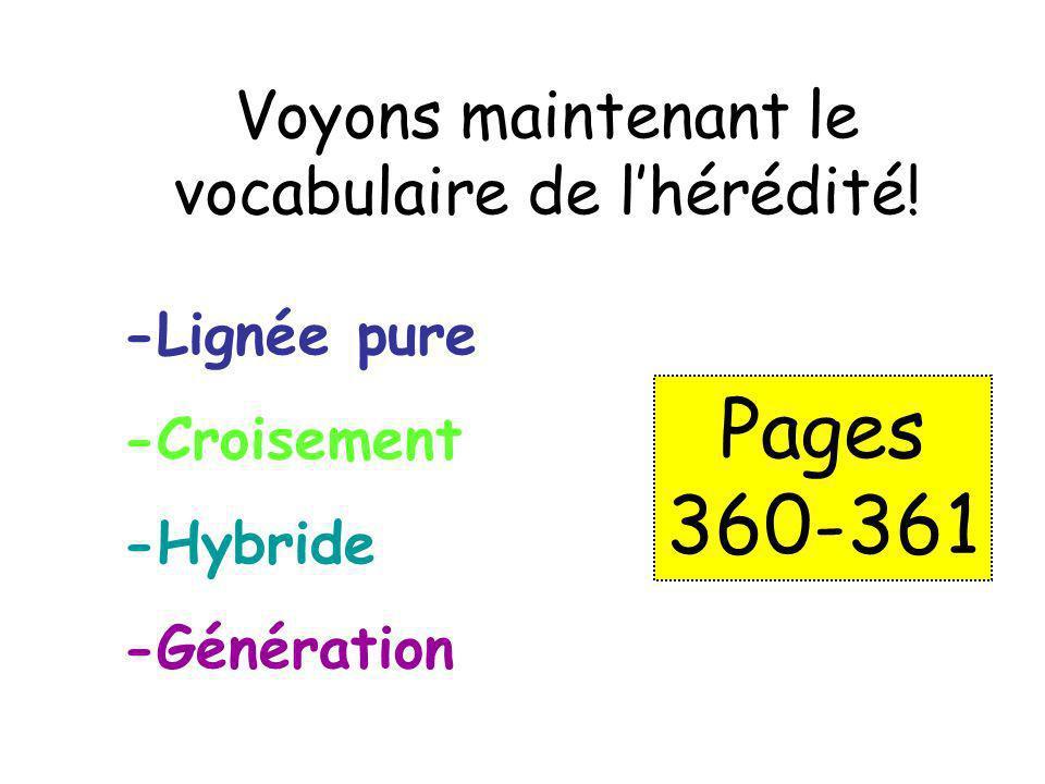 Voyons maintenant le vocabulaire de l'hérédité!