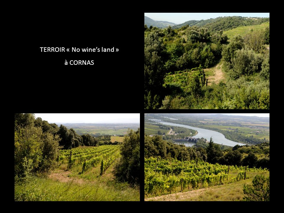 TERROIR « No wine's land »