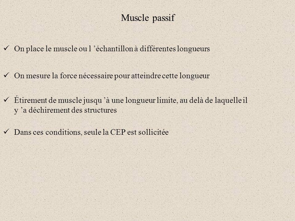 Muscle passif On place le muscle ou l 'échantillon à différentes longueurs. On mesure la force nécessaire pour atteindre cette longueur.