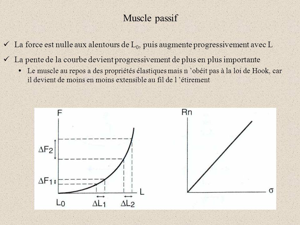 Muscle passif La force est nulle aux alentours de L0, puis augmente progressivement avec L.